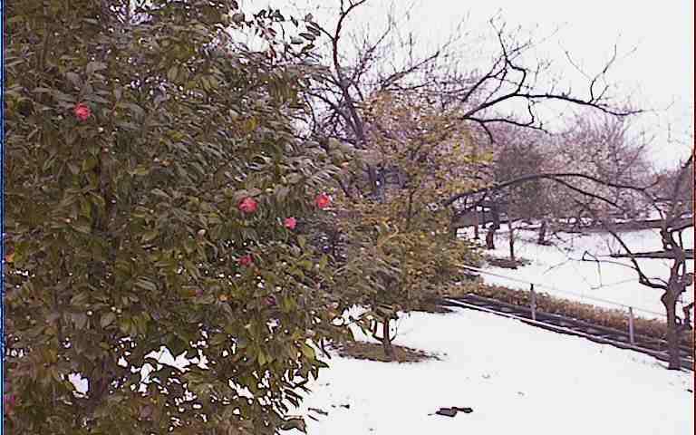 2005/2/25 雪景色と椿