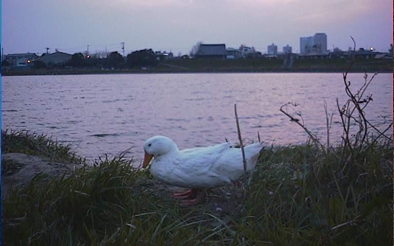 2005/3/27 休みの多摩川2