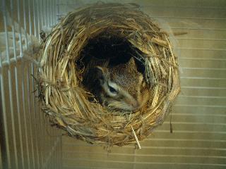つぼ巣は涼しいよーん!