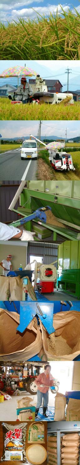 稲刈り・籾すり