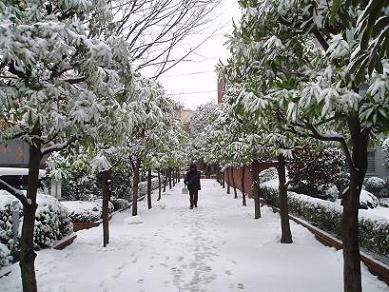 大晦日・雪の東京