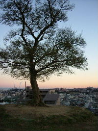 夕焼けとからっぽの木
