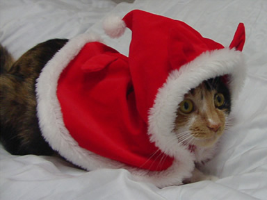 クリスマス・コスチューム